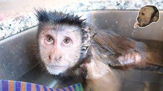 SPLISH SPLASH Double Monkey Bath! thumbnail