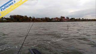 Знайшов хорошого активного окуня Невже розпочався жор окуня Ловля окуня осінню з човна