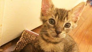 Foster kitten cam: Watching the kittens play!