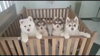 Scary Twinkle Twinkle Puppies Mesmerised!