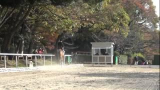 2011年度 関東学生馬術選手権大会 決勝 馬場 選手;阿部遊季 日本獣医生...