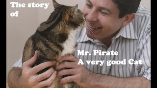 The story of Mr. Pirate, possibly the best cat EVAR