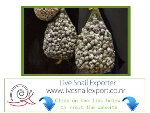 importer wholesale suppliers live snail Montreal, Quebec
