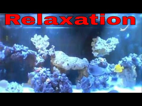 Saltwater Aquarium | Relaxation For Sleep | Meditation | Nature Sounds | No talking | some talking