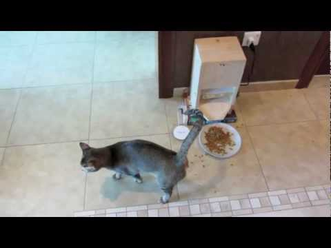 Homemade Automatic Cat Feeder