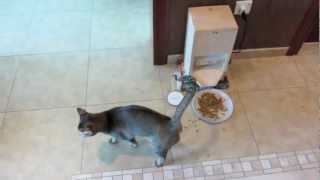 Homemade Automatic Cat Feeder