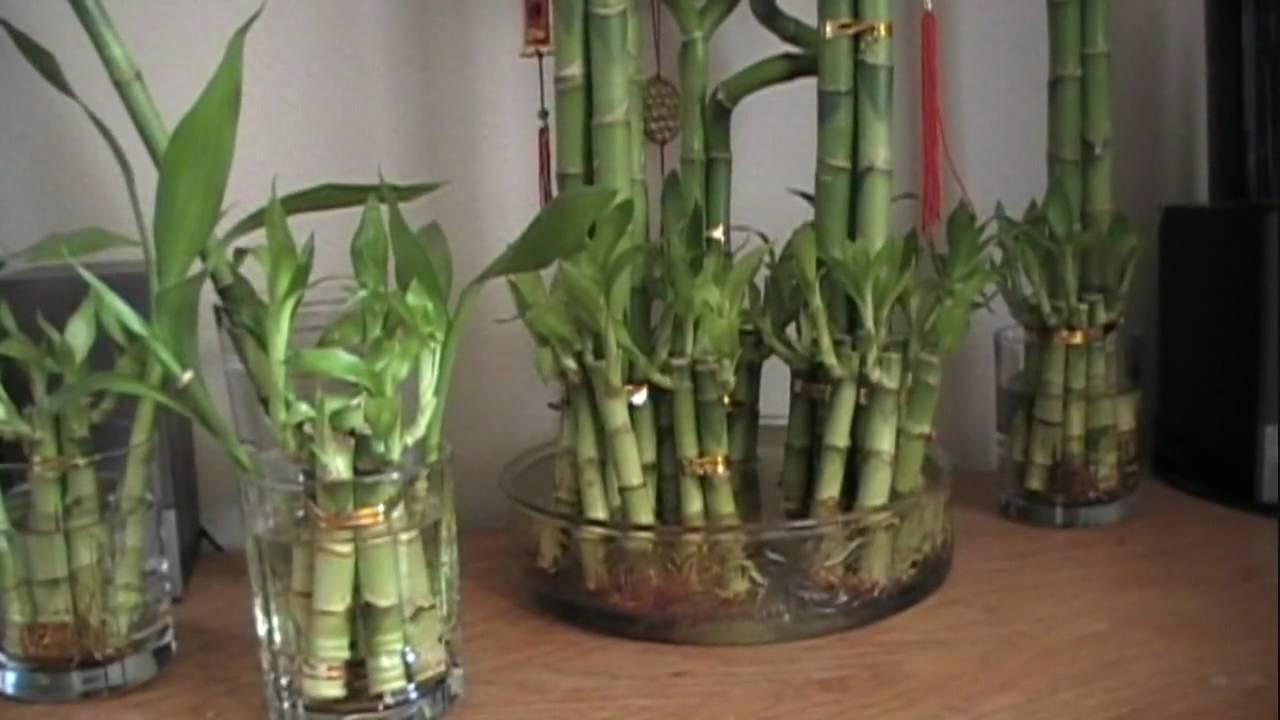Big Plant Vase