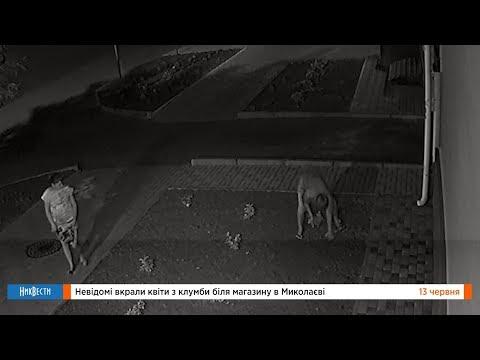 НикВести: Неизвестные украли цветы с клумбы у магазина в Николаеве
