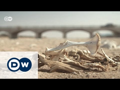 Somalia: Living with drought | Global 3000