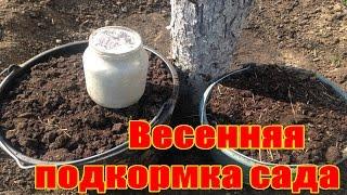 Весенняя подкормка сада / Когда и как подкармливать фруктовый сад