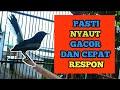 Kacer Gacor Nembak Isian Bikin Kacer Lain Emosi Dan Langsung Nyaut  Mp3 - Mp4 Download