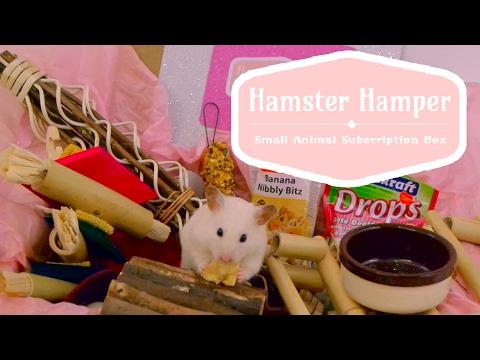 Opening a Hamster Hamper! 🐹📦