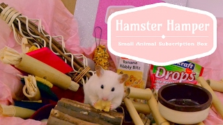 Opening a Hamster Hamper! 🐹📦 thumbnail