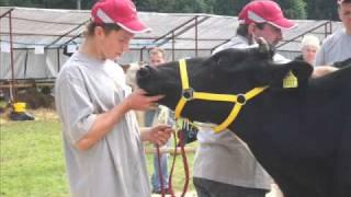 Agropromocja 2010 w Nawojowej- wystawa krów mlecznych