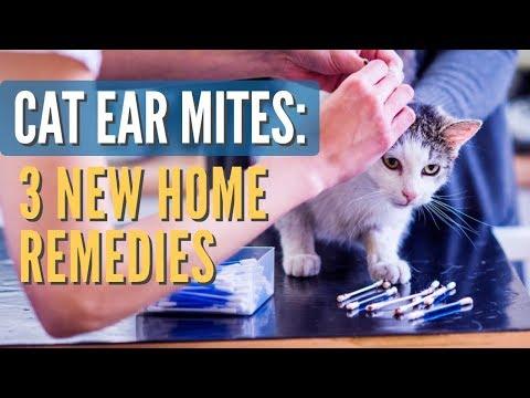 Cat Ear Mites: 3 New Remedies
