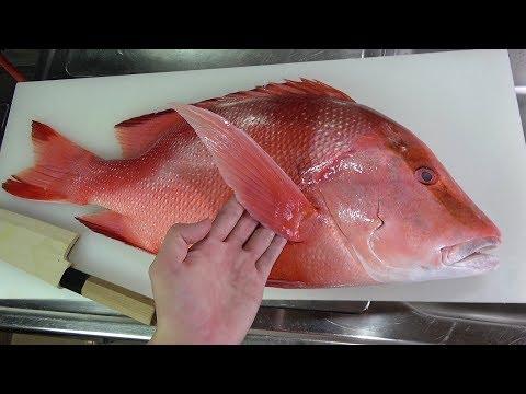 1000年に1度しかとれない鯛『センネンダイ』がきまぐれクックに入りました。無修正でいきます。刺身でいきます。Fishes once in a thousand years!