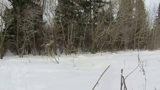 Полайка на выходе из леса.
