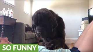 Needy Newfoundland refuses to let owner workout