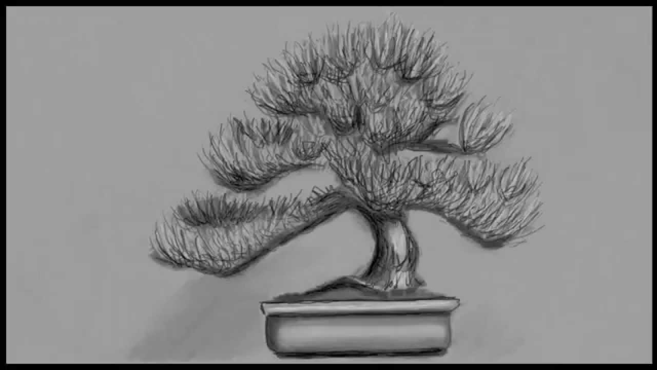 Bonsai Tree Speed Draw Youtube