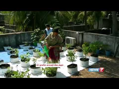 Terrace gardening: From Saplings to fully Grown Plants | Poovali | News7 Tamil