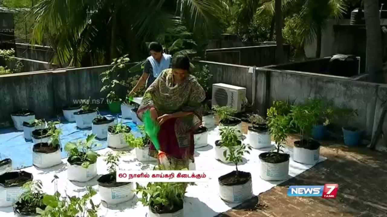 Terrace Gardening From Saplings To Fully Grown Plants