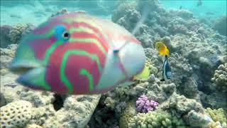 Рассвет в Sheraton Hotel Шарм эль Шейх и подводные съёмки