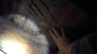 Mold in Crawlspace - Louisville KY Home Inspector