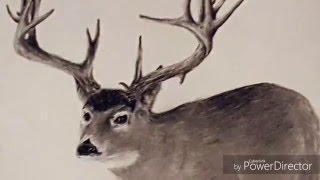 How to Draw a Whitetail Deer step by step