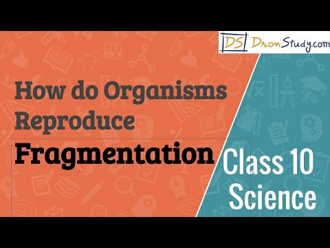 How do Organisms Reproduce - Fragmentation : CBSE Class 10 X Science (Biology)