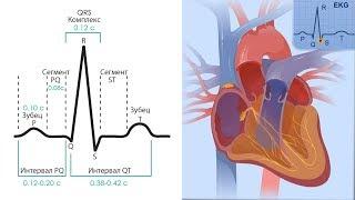 Основы ЭКГ за 100 минут | Проводящая Система Сердца | Зубцы, интервалы, сегменты на ЭКГ