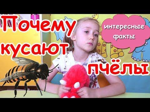 Аллергия на пчел • Как вылечить аллергию