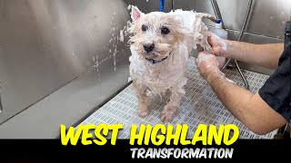 West Highland White Terrier GROOMING Transformation    Pet   Dog Grooming   The Dog