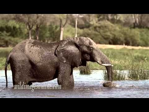 Machaba Luxury Safari Lodge, Botswana