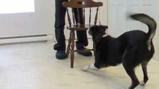 4. Allergy Alert Part 3 Remedial Training Ideas For Service Dogs Who Need To Do A Passive Alert
