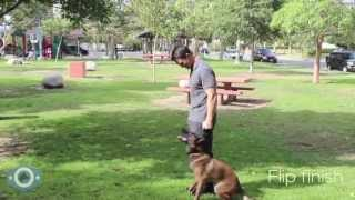 The Orion Canine Academy Obedience Test