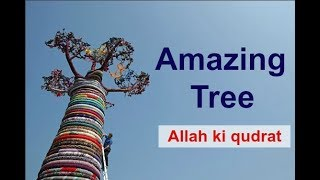 The World's Most Amazing Trees