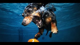 Funny Dogs Video Compilation 2016 #2