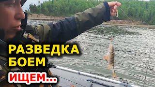 Еле поняли почему клюёт а не ловится Рыбалка на спиннинг Ловля окуня Разведка по новым местам