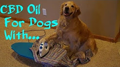 CBD For Dogs With High Blood Pressure 2018
