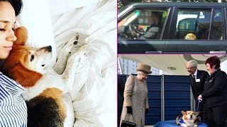 Luxury in Kensington Palace: Meghan Markle's beagle Guy was days away when she rescued him