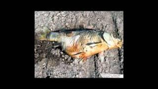 passenger of shit - fish head intro (RMX)