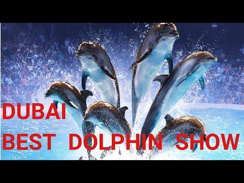 Dubai Dolphinarium show | Dubai Best Ever Dolphin show | Dubai dolphin and Seals show