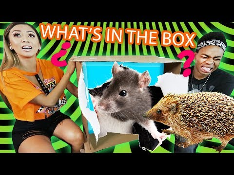 WHAT'S IN THE BOX CHALLENGE ft. Liane V