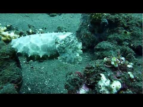 cuttlefish-&-squid