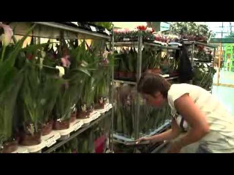 PlantPoint GB