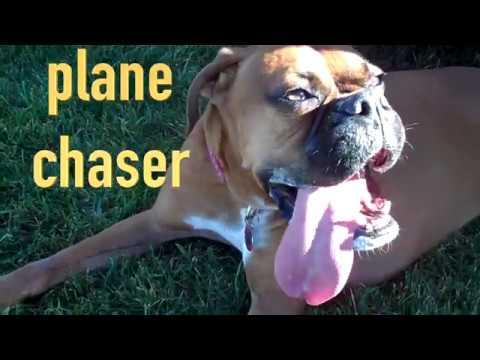 dog loves chasing RC Fun Cub