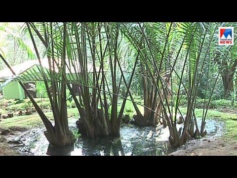 Palm Garden At Thrissur Peechi