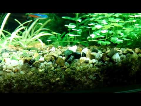 Открытый аквариум 100 литров