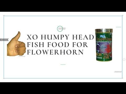 XO Humpy Head Food From Flowerhorn