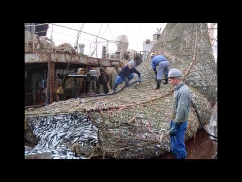 Estos Pescadores Lograron Coger un Montón de Peces, Aunque no Esperaban Encontrar Esto en sus Redes!